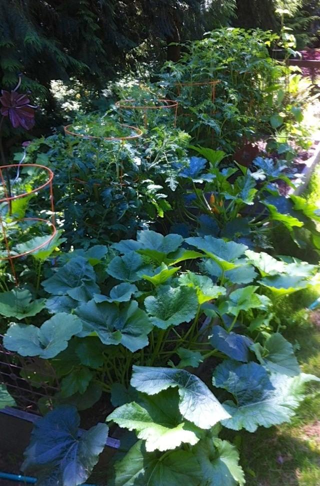 Jenn's Gardening thread- 2013 Garden10