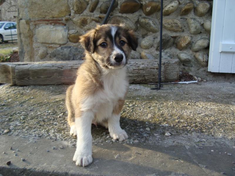 Quelqu'un a-t-il des chiens issus du Mont Kerchouan? - Page 3 Dsc01714