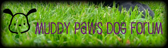 Muddy Paws Dog Forum