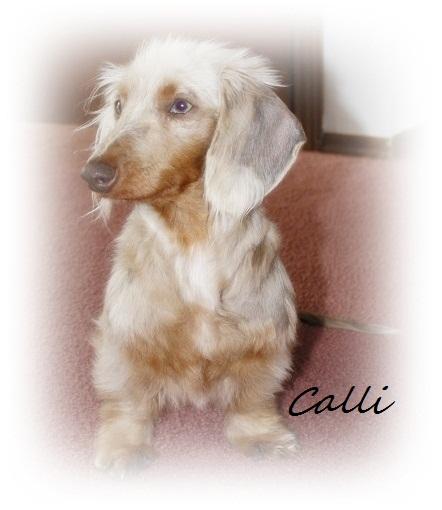 Isabella's Calli_10