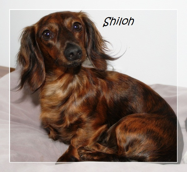 Brindles Shiloh10