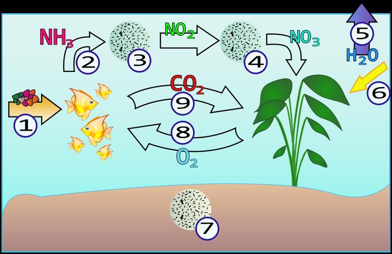 Réflexion: engrais, CO2, apports aux plantes: ? 800px-10
