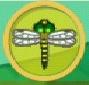 liste des insectes en images Cordul10