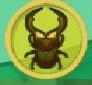 liste des insectes en images Cyclom10
