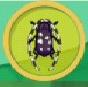 liste des insectes en images Longic10