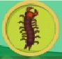 liste des insectes en images Mille-10