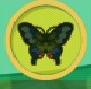 liste des insectes en images Papill12