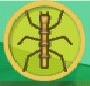 liste des insectes en images Phasme10
