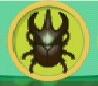liste des insectes en images Scarab11