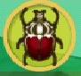 liste des insectes en images Scarab14
