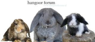 Hangoortjes - Portal Forum110