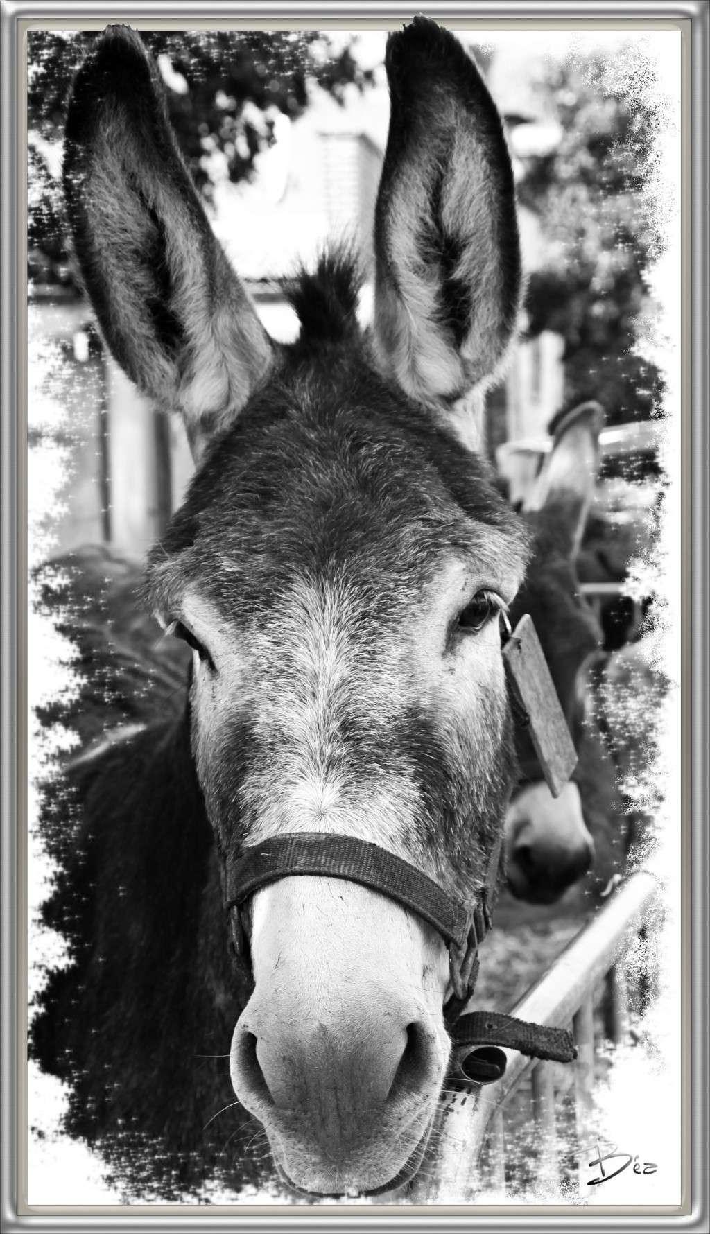 Fil sur les équidés (chevaux, ânes, mules) - Page 4 Img_7310