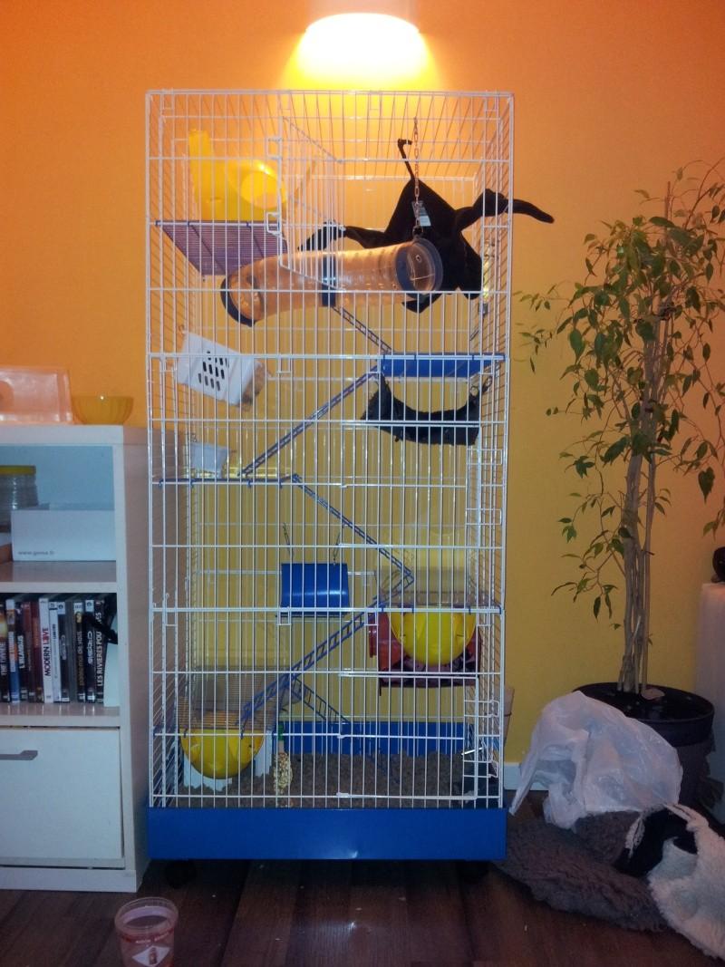 Cage type volière 20120910