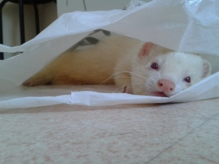 [Décédé] Donut, mâle albinos - Page 2 20130724