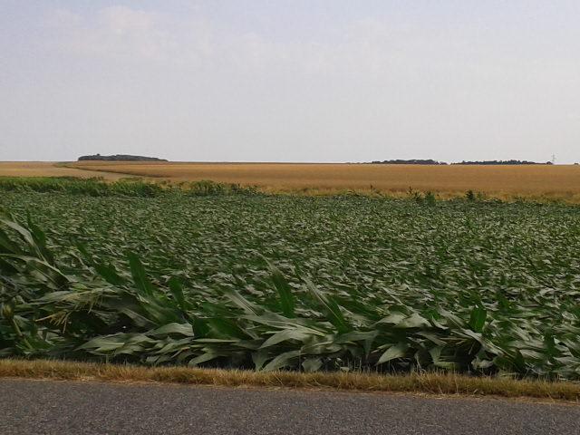semis de maïs 2013  2013-043