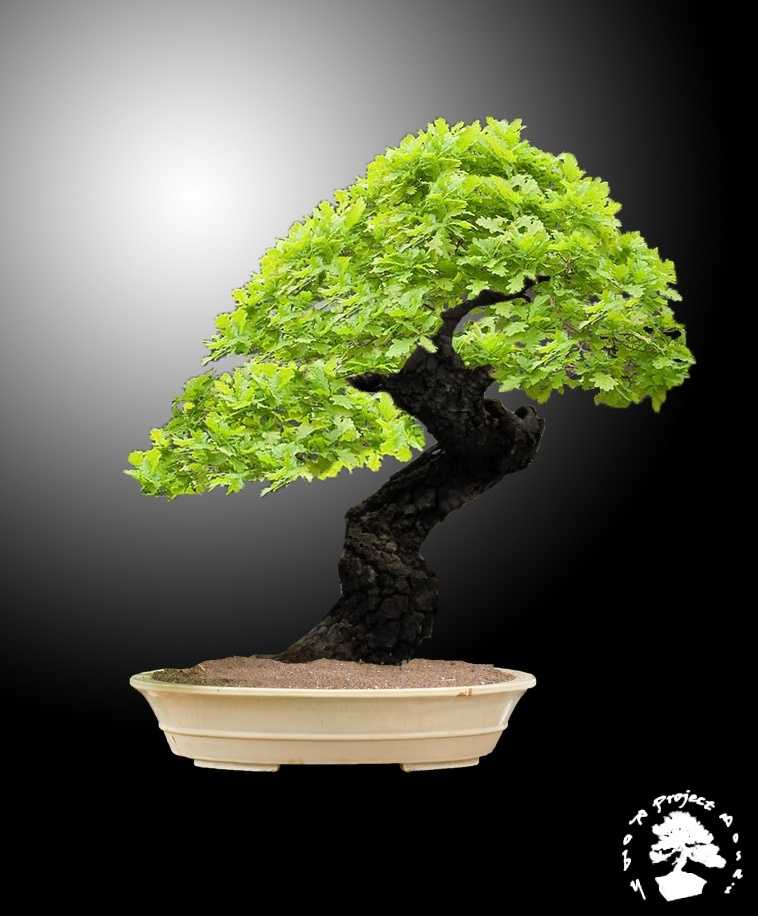 Quercus cerris - Pagina 2 Querci13