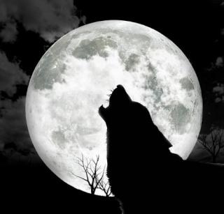 (МС) Волки 72669011