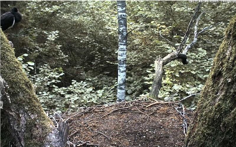 Wildtier-Livecams - Seite 2 Storch10