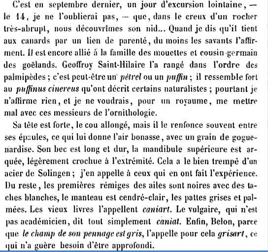 Drôle d'oiseau cap fréhel Cap_1810
