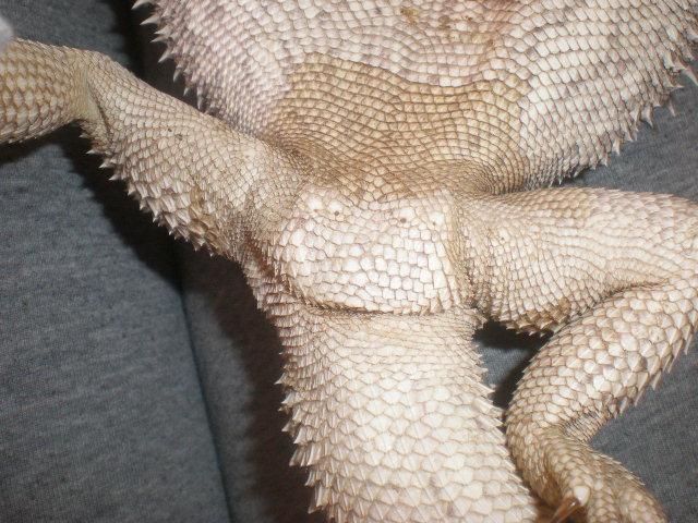 Male ou Femelle? P4080012