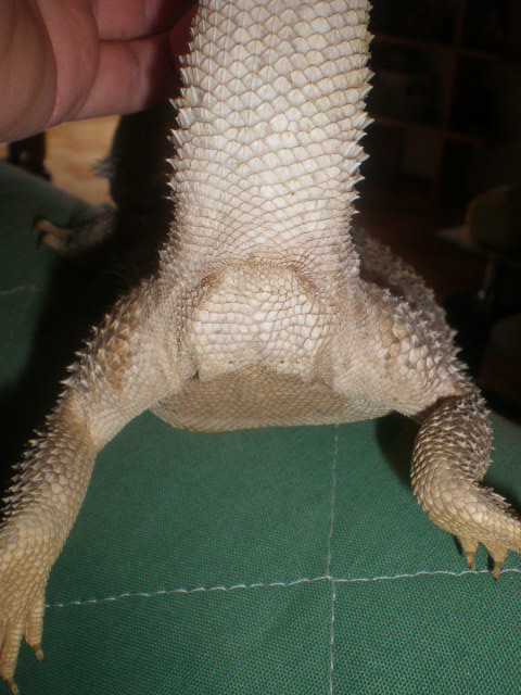 Male ou Femelle? P4130011