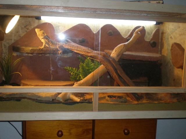 terrariums tranformés intérieurs P9160011