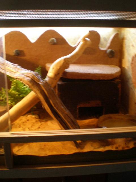 terrariums tranformés intérieurs P9160013