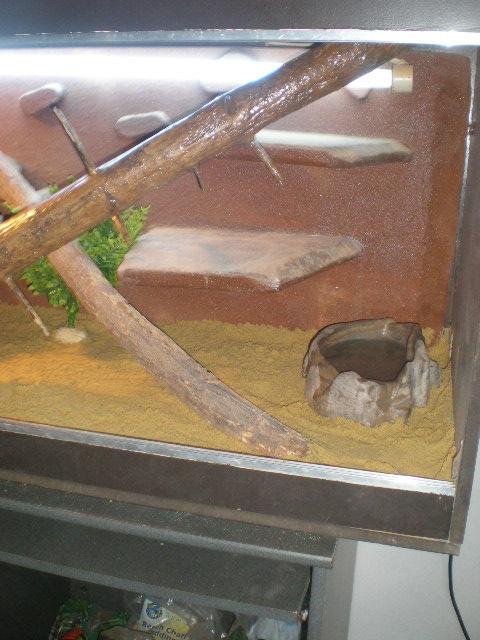 terrariums tranformés intérieurs P9160018