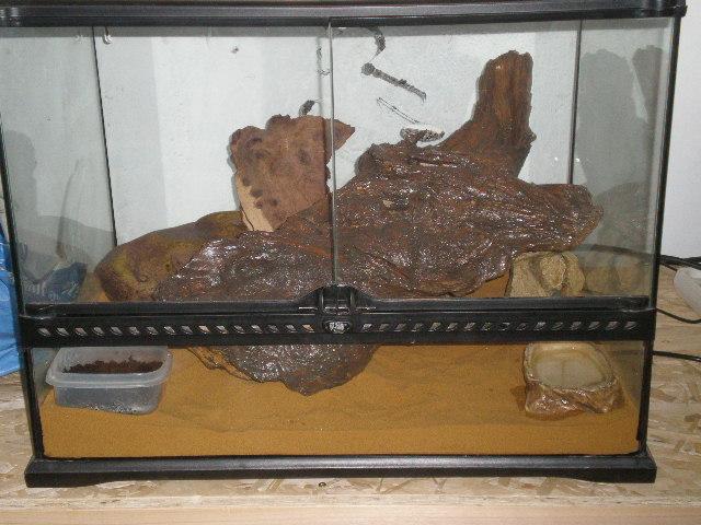 terrarium gecko léopard P9230010