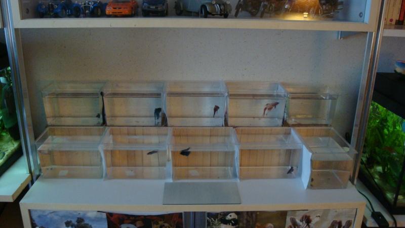 ma petite fishroom 47010