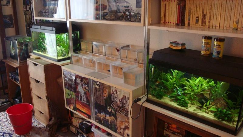 ma petite fishroom 47110