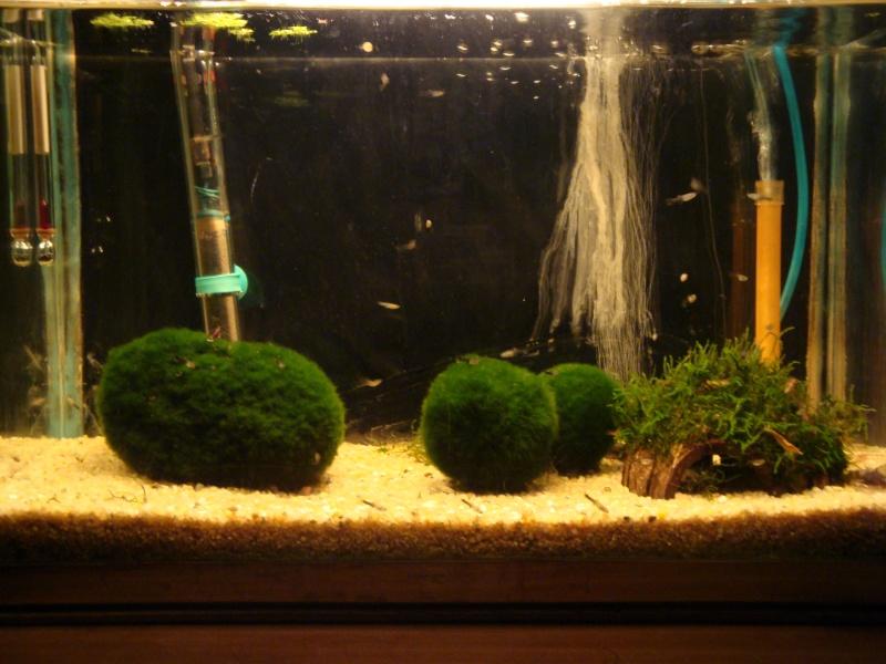 ma petite fishroom Ete_2010
