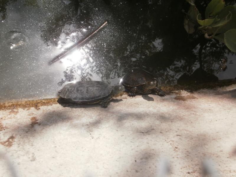 La Vallée des tortues - Sorède - 15.09.2012/13/04/2014 P9150010