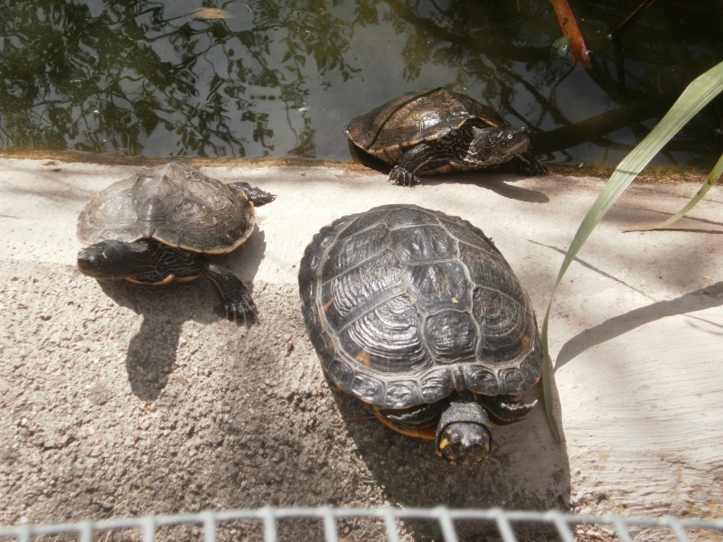 La Vallée des tortues - Sorède - 15.09.2012/13/04/2014 P9150012