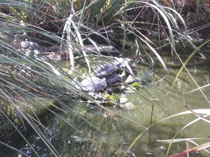 La Vallée des tortues - Sorède - 15.09.2012/13/04/2014 P9150013