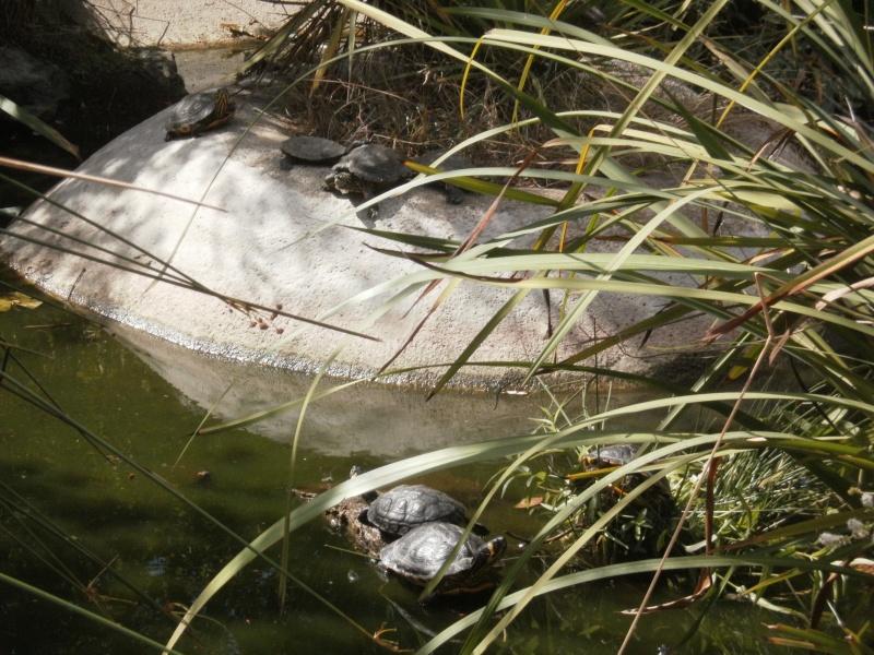 La Vallée des tortues - Sorède - 15.09.2012/13/04/2014 P9150014