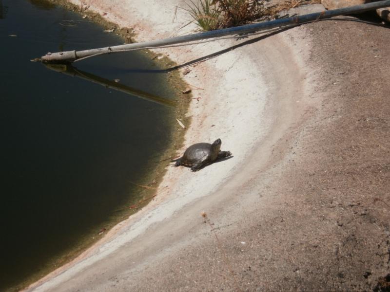 La Vallée des tortues - Sorède - 15.09.2012/13/04/2014 P9150019