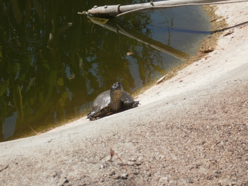 La Vallée des tortues - Sorède - 15.09.2012/13/04/2014 P9150020