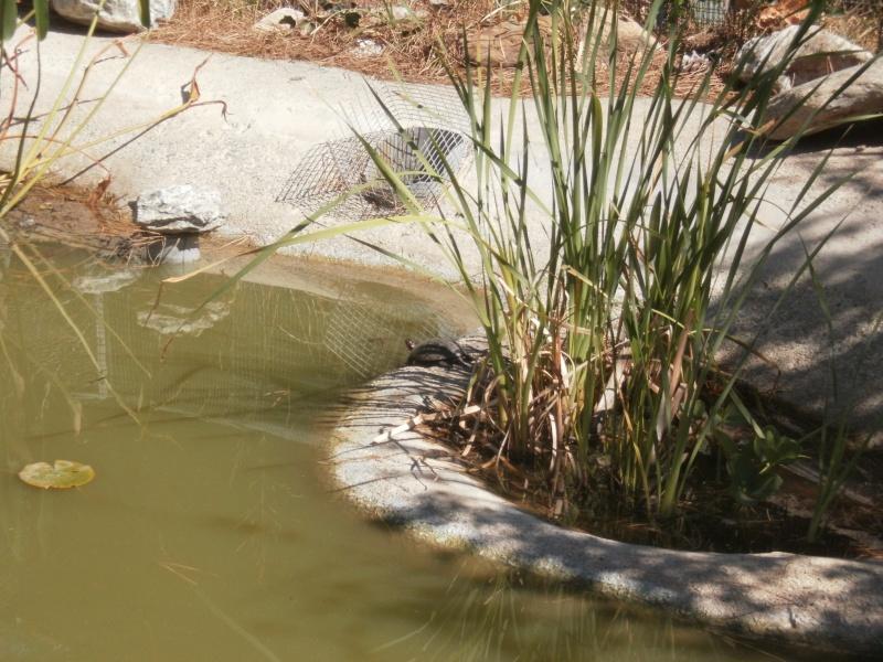 La Vallée des tortues - Sorède - 15.09.2012/13/04/2014 P9150023