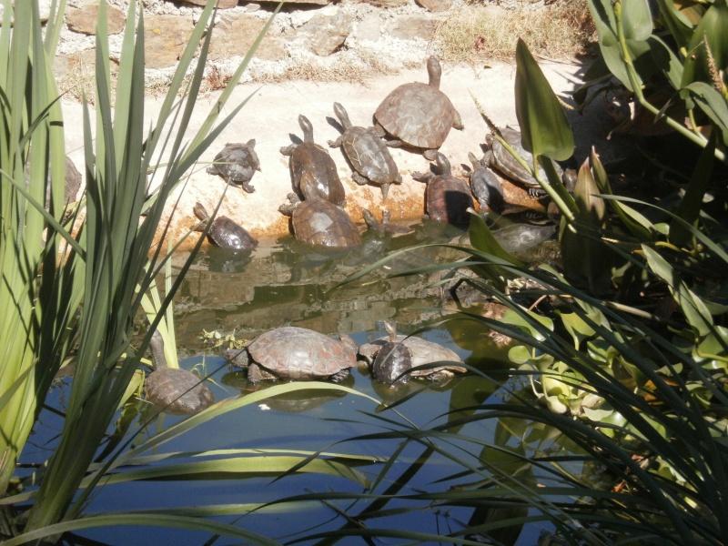 La Vallée des tortues - Sorède - 15.09.2012/13/04/2014 P9150026