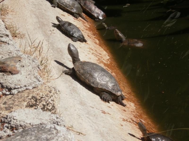 La Vallée des tortues - Sorède - 15.09.2012/13/04/2014 P9150027