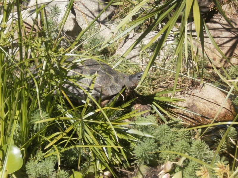 La Vallée des tortues - Sorède - 15.09.2012/13/04/2014 P9150030