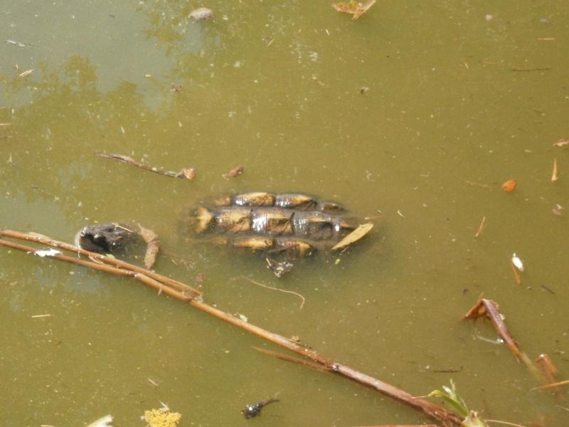 La Vallée des tortues - Sorède - 15.09.2012/13/04/2014 P9150033