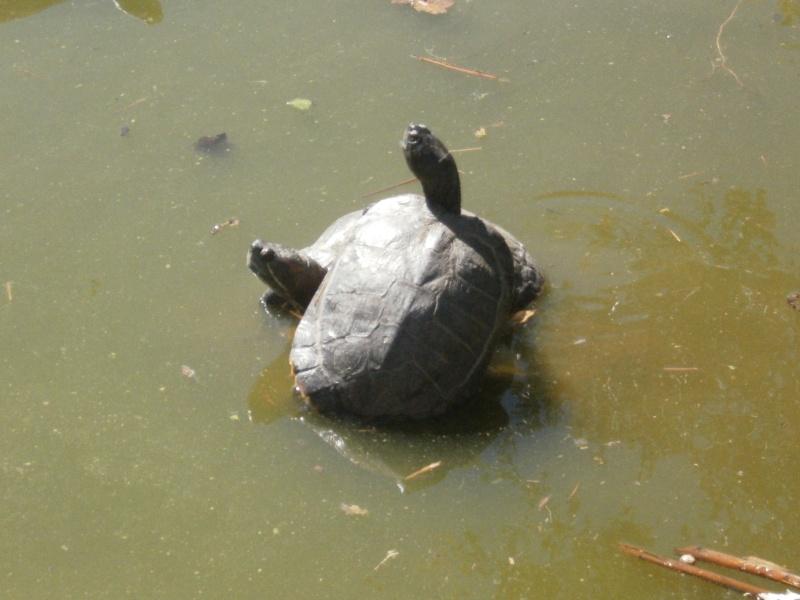 La Vallée des tortues - Sorède - 15.09.2012/13/04/2014 P9150034