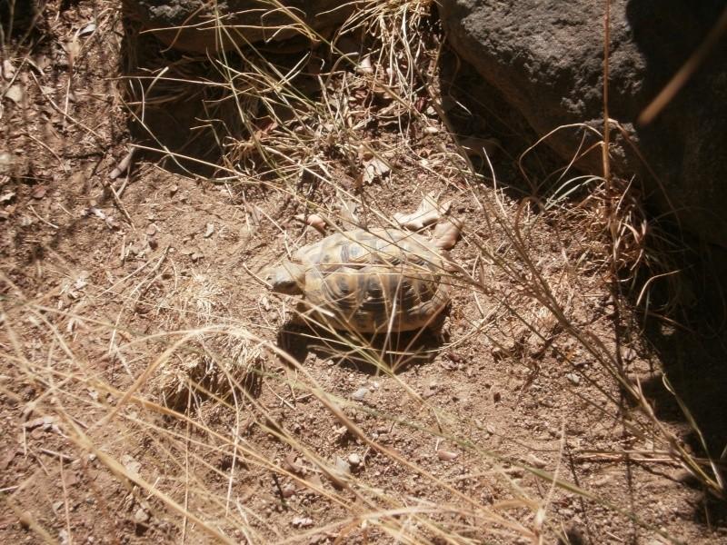 La Vallée des tortues - Sorède - 15.09.2012/13/04/2014 P9150035