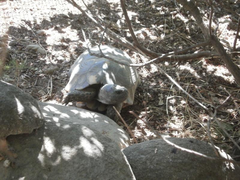 La Vallée des tortues - Sorède - 15.09.2012/13/04/2014 P9150036