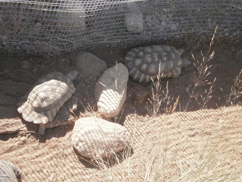La Vallée des tortues - Sorède - 15.09.2012/13/04/2014 P9150037