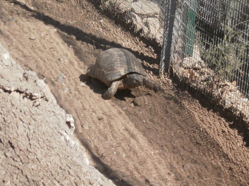 La Vallée des tortues - Sorède - 15.09.2012/13/04/2014 P9150038