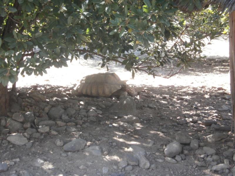 La Vallée des tortues - Sorède - 15.09.2012/13/04/2014 P9150042