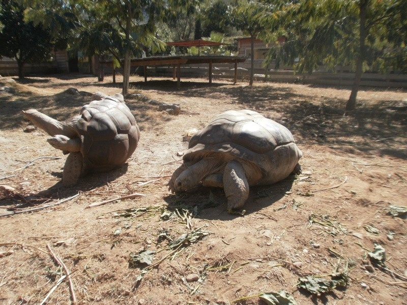 La Vallée des tortues - Sorède - 15.09.2012/13/04/2014 P9150112